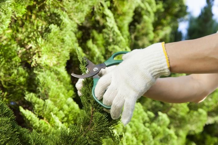 異業種転職に造園業をおすすめする理由
